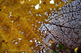 Leaf: Lansing, MI