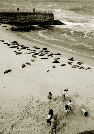 Seals and Kids: LaJolla, CA