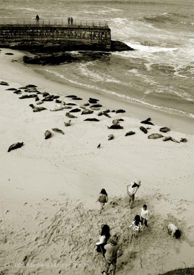 Seals and Kids: LaJolla, CA